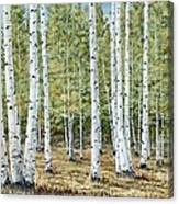 Aspen South Saddle Blue Mtn 24 X 48 Canvas Print