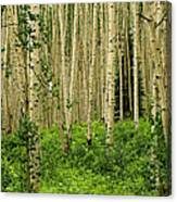 Aspen Summer Canvas Print