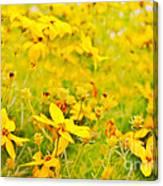 Aspen Sunflower Canvas Print