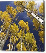Aspen Tops  Canvas Print