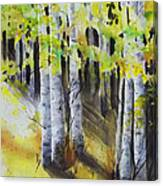 Aspen Trail Canvas Print