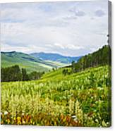 Aspen Trees And Wildflowers Canvas Print