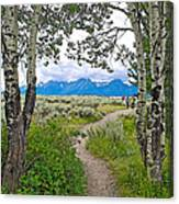 Aspen Trees On Trail To Jackson Lake At Willow Flats Overlook In Grand Teton National Park-wyoming  Canvas Print