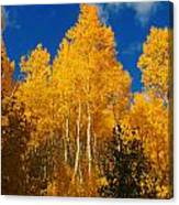 aspen WOW Canvas Print