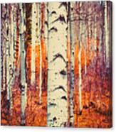 Aspenglow Canvas Print