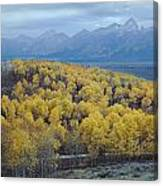 Aspens And The Tetons Canvas Print