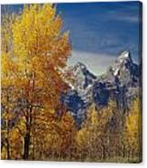 1m9353-aspens In Autumn And The Teton Range - V Canvas Print