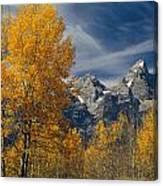 1m9352-aspens In Autumn And The Teton Range Canvas Print