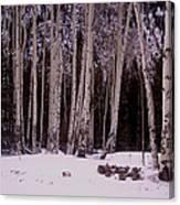 Aspens In Snow Canvas Print
