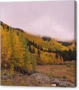Aspens In The Mist Canvas Print
