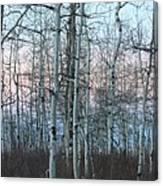 Aspens In Twilight Canvas Print