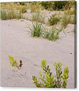 Assateague Dunes 2 Canvas Print