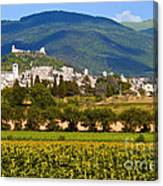Assisi From The Sunflower Fields Canvas Print