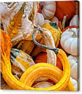 Assorted Gourds Canvas Print