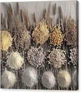 Assorted Grains And Flour Canvas Print