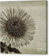 Aster With Textures Canvas Print