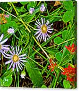 Asters And Scarlet Paintbrush On Swan Lake Trail In Grand Teton National Park-wyoming  Canvas Print