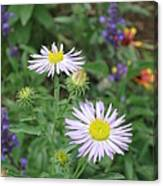 Asters In Close-up Canvas Print