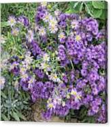 Asters Light And Dark Canvas Print