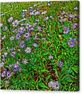 Asters On Heron Lake Trail In Grand Teton National Park-wyoming- Canvas Print