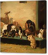 At A Dogs' Home Canvas Print