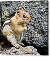 At Home In The Lava Beds Canvas Print