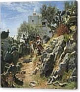 At Noon On A Cactus Plantation In Capri Canvas Print