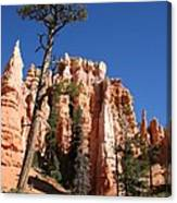 At The Bottom Of The Bryce Np Canvas Print
