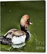 At The Duck Pond Canvas Print