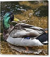 At The Duck Pond V5 Canvas Print