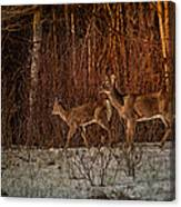 At The Edge Of The Woods Canvas Print