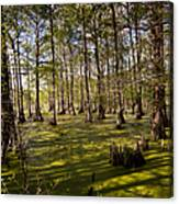Atchafalaya Swamp   #6913 Canvas Print