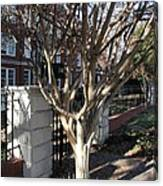 Atlanta Tree Canvas Print
