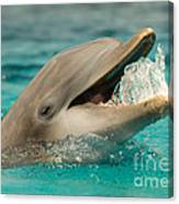 Atlantic Bottlenose Dolphin Canvas Print