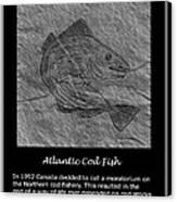 Atlantic Cod Fish Sketch Canvas Print