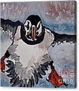 Atlantic Puffin - Set 2 Of 3 Canvas Print