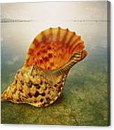Atlantic Trumpet Triton Shell Canvas Print