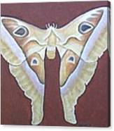 Atlas Moth Canvas Print