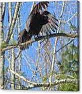 Attack Of The Turkey Vulture Canvas Print