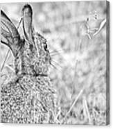 Attentive Hare Canvas Print