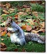 Attentive Squirrel Canvas Print