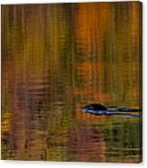 Atumn Reflections Canvas Print