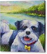 Auggie Canvas Print
