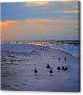August Beach Morning With The Sea Gulls Canvas Print