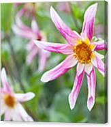 August Flower Gardens Canvas Print