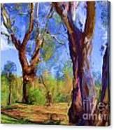Australian Native Tree 2 Canvas Print