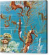 Australian Seahorses Canvas Print