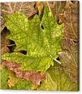 autumm is coming 3 - A carpet of autumn color leaves Canvas Print