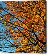 Autumn 2013 Canvas Print
