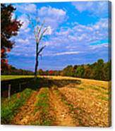 Autumn And The Tree Canvas Print
